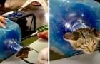 Salvano un gattino randagio intrappolato in una bottiglia di plastica: