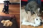 18 katten die zich gewoon niet goed wisten te gedragen met hun honden-