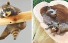 Questo artista giapponese rende vivo il legno scolpendo animali che sembrano veri
