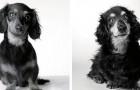 Una ragazza realizza una serie di foto emozionanti per mostrare come invecchiano i nostri amici cani