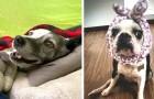 Non chiamateli vecchi: questi cani in età avanzata sono ancora dei cuccioli pieni di energia