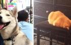 18 foto's van katten en honden die niet eens beseffen dat ze zich vreemd gedragen