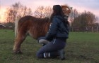 Here how a wild pony goes crazy during a training lesson ! HILARIOUS