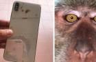 Un ragazzo perde il cellulare e lo ritrova nella giungla vicino casa pieno di selfie di scimmie