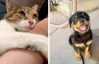 15 four-legged friends who have conquered their owners with a single glance