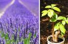 6 piante che secondo la tradizione sono di buon auspicio per ricchezza, salute e amore