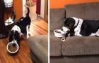 Questo cagnolone prende la ciotola e si accomoda sul divano per mangiare: fa venir voglia di rilassarsi