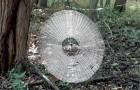USA: Durch Zufall wurde ein Spinnennetz entdeckt, das so groß ist, dass es einen Menschen