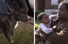 Un cane randagio ha protetto per ore un bimbo che si era perso fuori casa: è il suo eroe a 4 zampe
