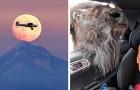 18 photos où le timing parfait a permis de créer des scènes amusantes et mémorables