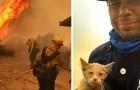 Un pompiere salva un micio da un terribile incendio: ora è il suo fidato
