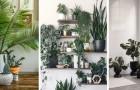 Vidéos de Jardinage