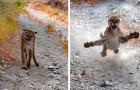 Un ragazzo viene inseguito da un puma per 6 lunghissimi minuti: il video mette i brividi