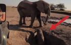 Un elefantino è destinato a morire in una buca ma questi uomini compiono un miracolo