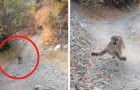 A guy sees a puma behind him during a mountain run: he is chased by it for 6 thrilling minutes
