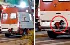 Un chien saute sur le pare-chocs de l'ambulance où se trouve son maître : il ne veut pas le quitter une minute