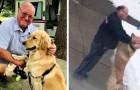 O vídeo hilário de um cachorro que todos os dias espera a chegada de seu