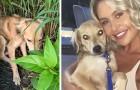 Um jovem casal de férias encontra um cachorro ferido e abandonado: eles gastam US$ 4.500 para levá-lo para casa