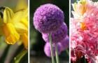 9 bulbi da piantare in autunno per godere di splendide fioriture primaverili