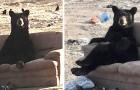 Une femme freine brusquement lorsqu'elle voit un ours assis sur le canapé avec les pattes croisées