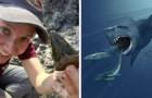 Usa, scoperti 87 enormi denti di mega-squali: facevano parte di un