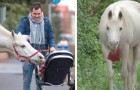 Um cavalo branco anda sozinho pelas ruas de seu bairro todos os dias: ele agora é uma celebridade local