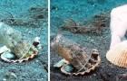 Ein Taucher überredet eine Krake, den Plastikbecher aufzugeben, den er sich als sein