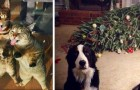 17 photos of dogs and cats who don't care about the house rules in any way