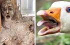 L'altra faccia del mondo naturale: 15 foto di animali e natura capaci di farci sobbalzare dallo spavento
