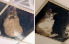 Uma mulher instala um teto transparente onde os gatos podem ver sua dona a qualquer momento do andar de cima