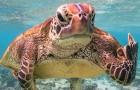 La foto di una tartaruga che mostra il