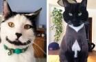 Les 21 chats les plus insolites, nés avec une tache particulière sur la fourrure qui les rend uniques au monde
