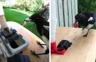 Ein Mann kreiert eine Maschine, die Elstern im Austausch gegen Müll Nahrung gibt: Er trainiert die Vögel, zu recyceln