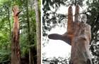 Un homme a transformé un arbre à abattre en une main géante tendue vers le ciel