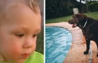 A 1-year-old almmost drowns in a pool, but his dog throws himself into the water to save him