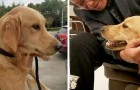 A dog travels 60 miles to return to his humans who had temporarily entrusted him to a friend