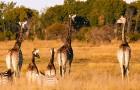 Lo Zimbabwe vieta l'estrazione mineraria nelle riserve naturali: una sentenza che salva animali e ambiente