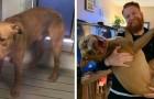 Sauvés de la rue et soignés par l'affection d'une famille aimante : 16 animaux que l'amour a rendu méconnaissables