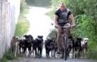 Quest'uomo vive con 16 vivacissimi cani: la loro educazione vi sorprenderà
