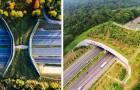 16 ponti che aiutano gli animali ad attraversare in sicurezza: splendidi esempi di convivenza uomo-natura