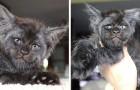 Walküre, das menschengesichtige Kätzchen, das mit seinem Gesichtsausdruck Tausende von Menschen auf der ganzen Welt verzaubert...
