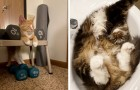 15 cats who dozed off in the most unthinkable places and positions