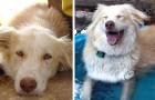 Queste foto mostrano 18 animali prima e dopo l'adozione: hanno ritrovato il sorriso e una vita migliore
