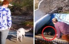 They visit an abandoned water park and meet 2 strays who lead them to their friend in need