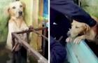 Ein Hund rettet sich vor einer heftigen Überschwemmung, indem er sich am Geländer festhält: der Moment der Rettung