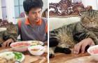 18 katten die er trots op zijn het leven van hun baasjes te domineren