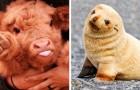 22 cuccioli così teneri che possono far tornare il sorriso anche nella giornata più storta