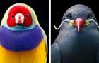 Questo fotografo riesce a immortalare gli uccelli più rari e colorati in affascinanti pose