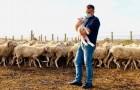 Um pastor adoece com Covid-19 e não pode mais cuidar de seu rebanho: o prefeito de sua cidade decide substituí-lo