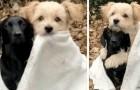 Due cuccioli si abbracciano sotto una copertina bianca per ripararsi dal freddo: un'immagine che scalda il cuore